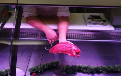 Strip LED for meat counter – butcher shop – Sicily